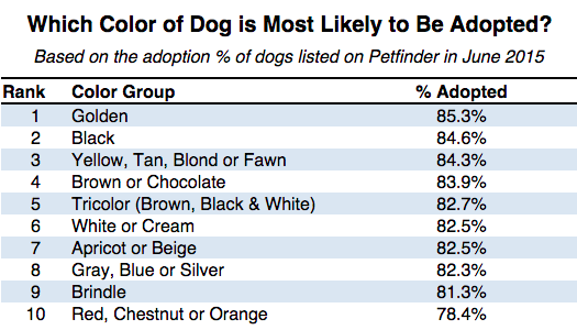 Dogs That Are Most Likely To Get Adopted