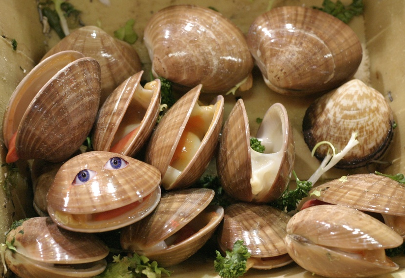 [Image: clam4.png]