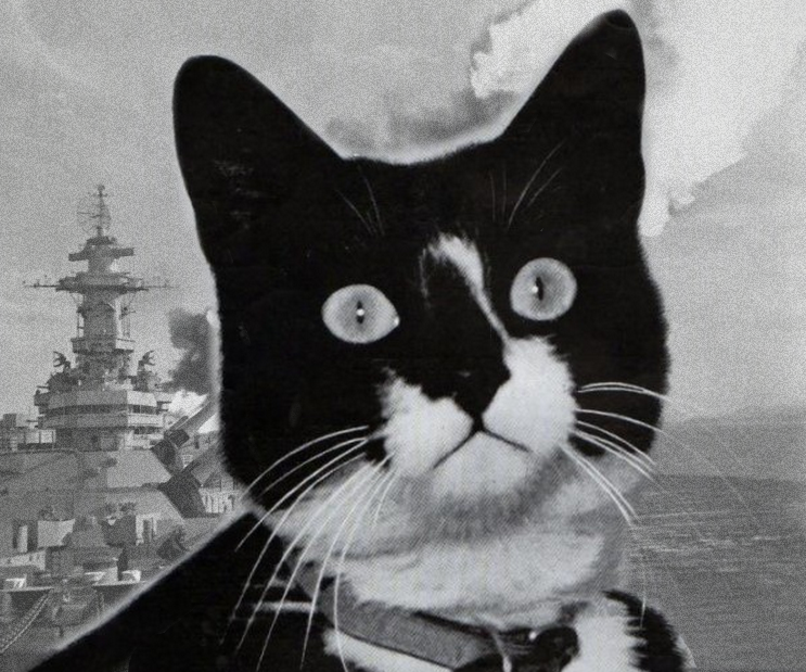 The Most Decorated Cat in Military History