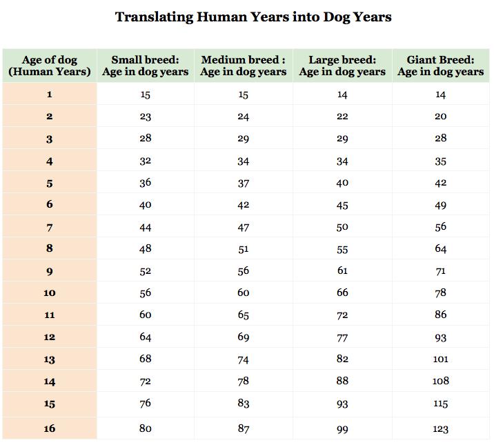 Cat Vs Human Years Chart