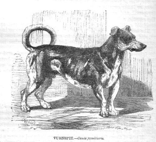 Dalmatian Dogs Extinct Other Dog Breeds Went Extinct
