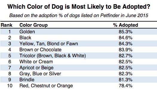 Adopting An Older Dog Vs A Puppy