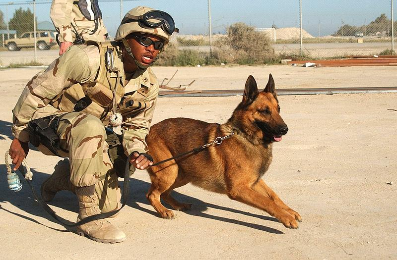 How Much Does It Cost To Train A Military Dog