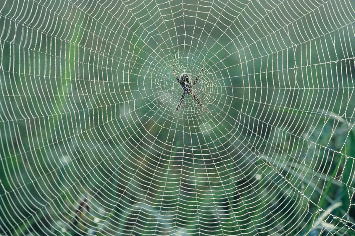 The Spider Web Engineer